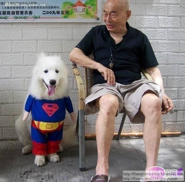 dog (10)