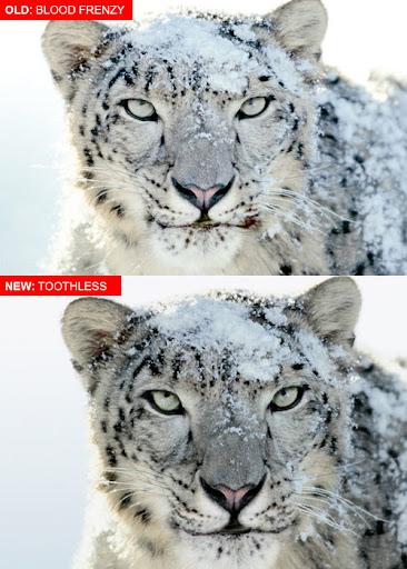 Snoe Leopard PSD