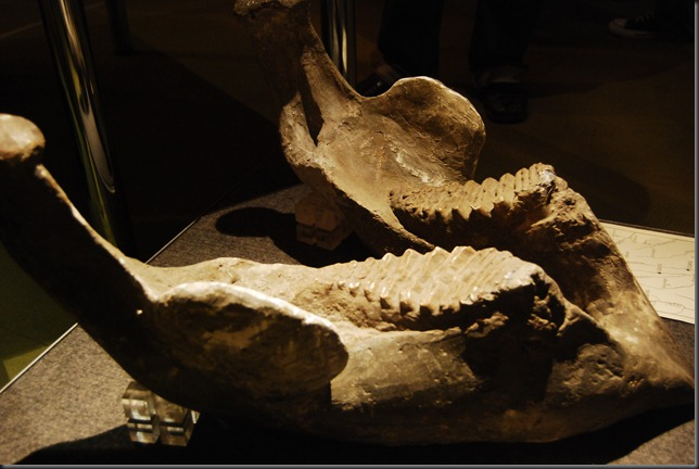 fosile_014