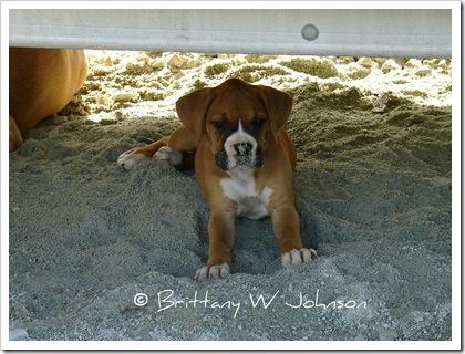 Puppy Elixer2