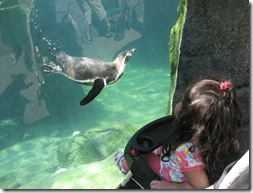 Lily and Penguin