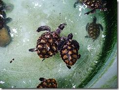 turtles-one