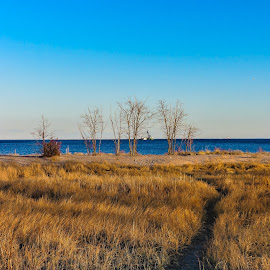 A Pathway by Kimberly Stokes-Holder - Landscapes Prairies, Meadows & Fields ( long island sound, west haven beach, nature, path, ocean, landscape )