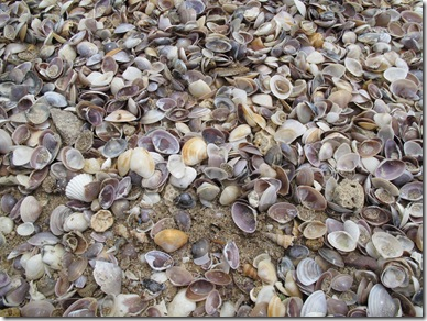 Shells Kaw Kwang Beach
