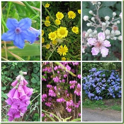 blomsterpåvegenpage