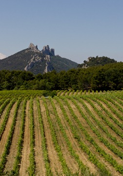 dentelles-vines