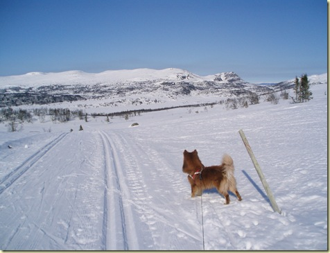 fjell 007