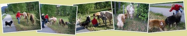 Vis Gutta boys møter hest
