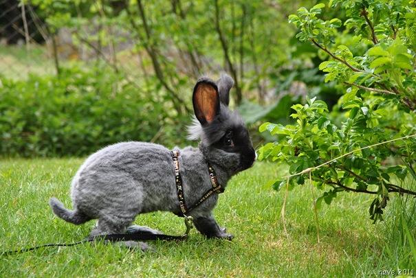 kaniner 006