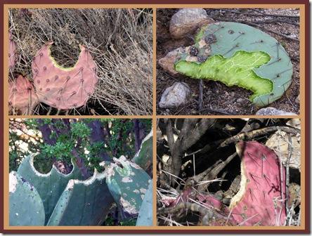 cactus picnic 02