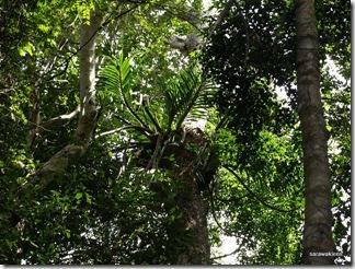 Santubong_Mountain_Kuching_Sarawak_24