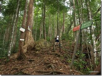 Santubong_Mountain_Kuching_Sarawak_27