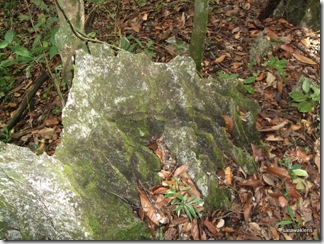 Limestone_hill_climb_091121_7