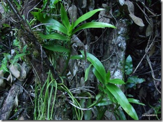 9703_orchids_on_fallen_trees