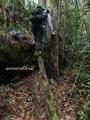Teluk_Limau_trail_Bako_National_Park_11