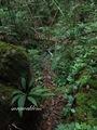 Teluk_Limau_trail_Bako_National_Park_27