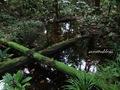 Teluk_Limau_trail_Bako_National_Park_22
