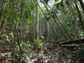 Teluk_Limau_trail_Bako_National_Park_47