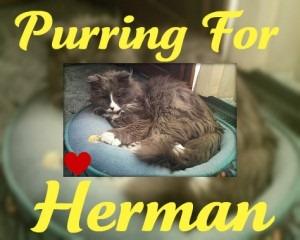 Herman-2010-04-10-300x240