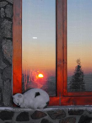 Cabana Cozia. Apus de soare cu pisici
