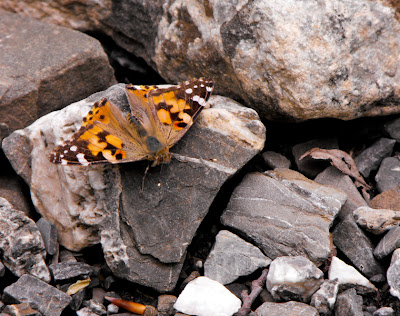 fluture si pietre - butterfly and stones