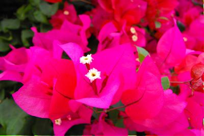 floare pentru suflet