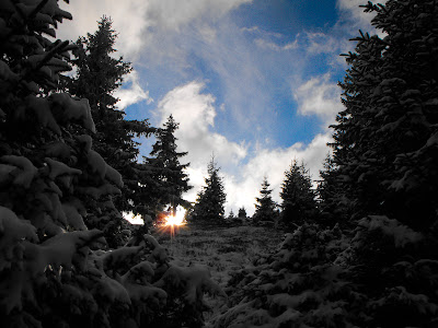 Ciucas. Prima ninsoare. Padurea de brazi. Soarele