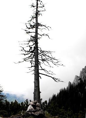 copacul si momaia de piatra