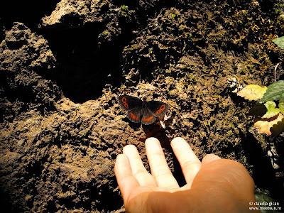 Fluturele din palma mea