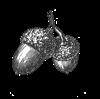acorns copy[8]