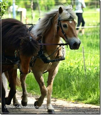 Hästspann2av3