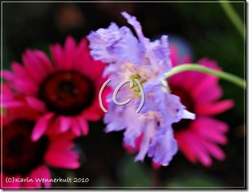 Blommig oljemålning
