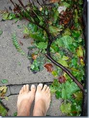 Wet Barefoot Run 9760