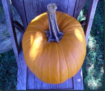 Autumn 2009 010