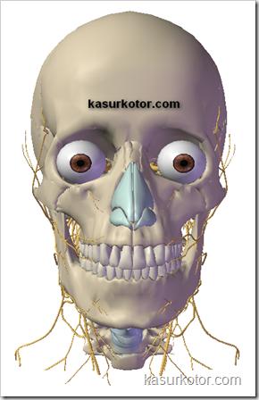 Melihat dan Mempelajari Anatomi Bagian Dalam Tubuh Manusia Dengan Tampilan 3D