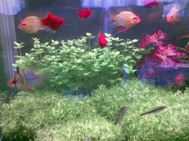 aquirum fish tank