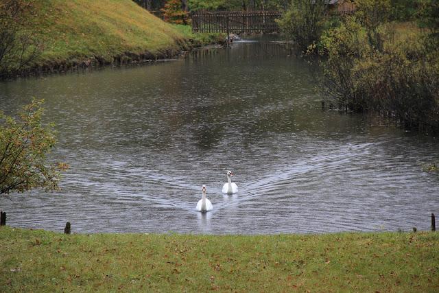 Swans at Linderhof Germany