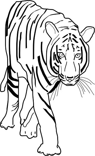 african tiger coloring pages - photo#10