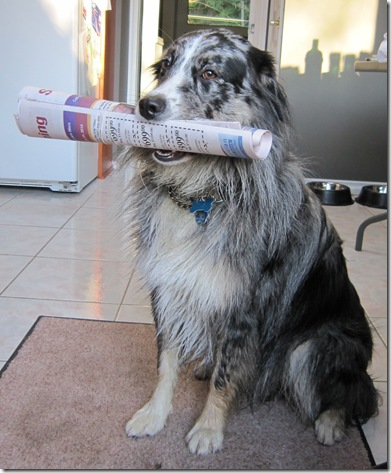 Mojo holding newspaper