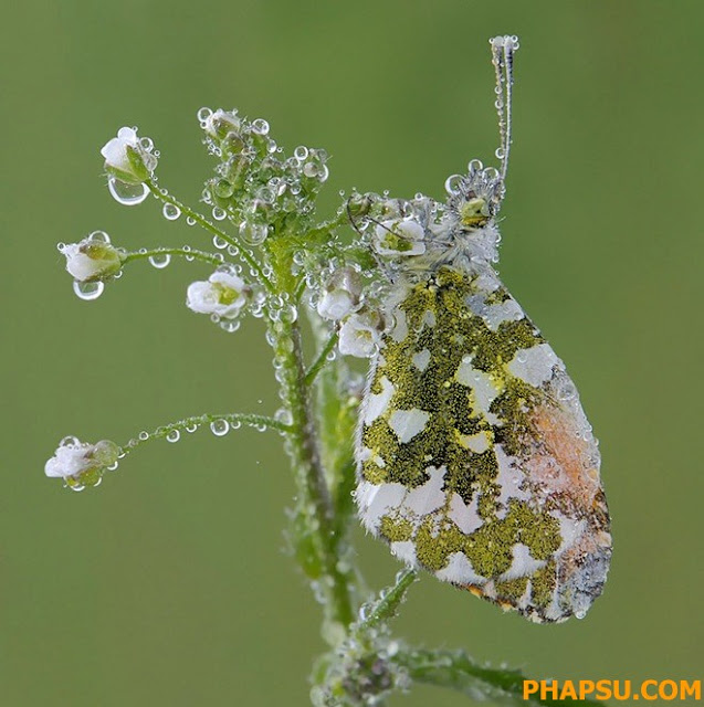 Beautiful_Dew_Drops_Macro_Photographs_1_9.jpg