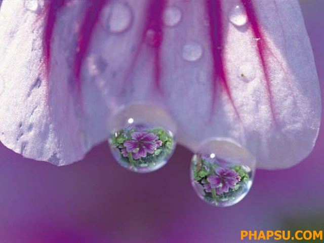 Beautiful_Dew_Drops_Macro_Photographs_1_28.jpg