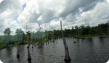 swamp-area-9