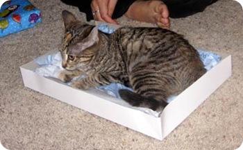 cleo-in-box