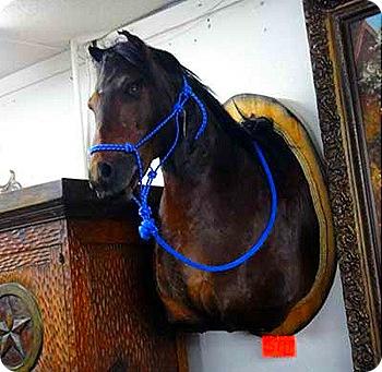 7-horse-head