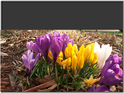 spring flowers 2010 009