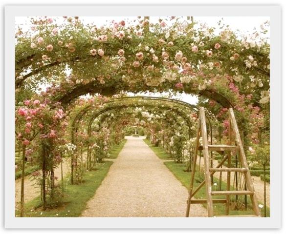 summertime-roses[1]