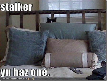 Stalker kitty