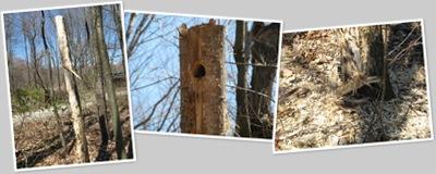 View Woodpecker tree
