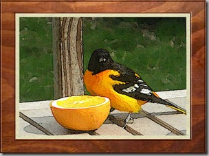Oriole9 Watercolor