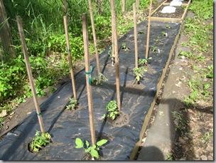 Garden 09